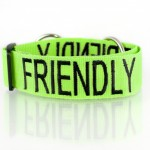 Friendly_Collar_EKP_9682-1024x681